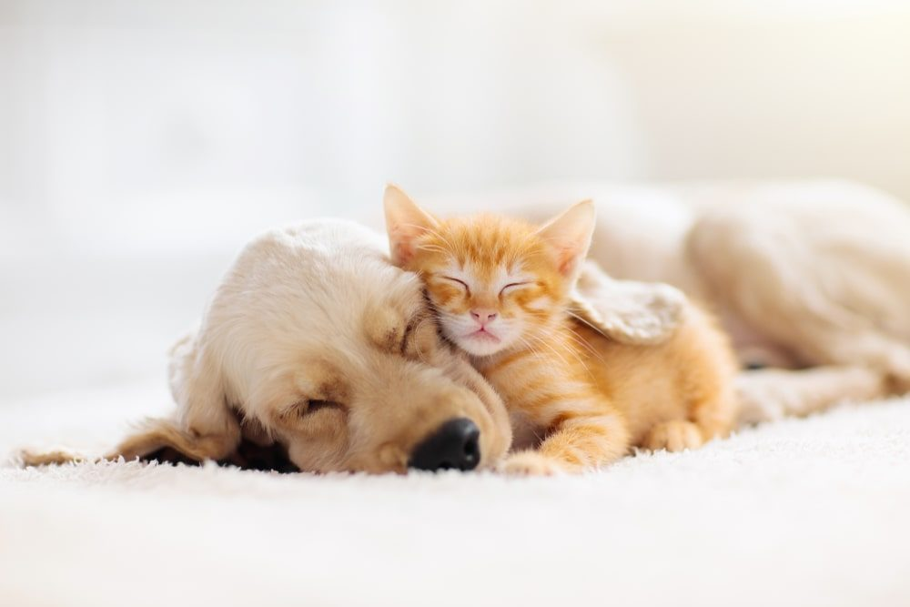 Spending time with pets is a great way to reduce stress and anxiety